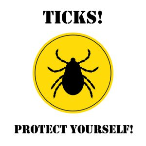 What To Do If Your Child Gets a Tick Bite - Healthy Kids